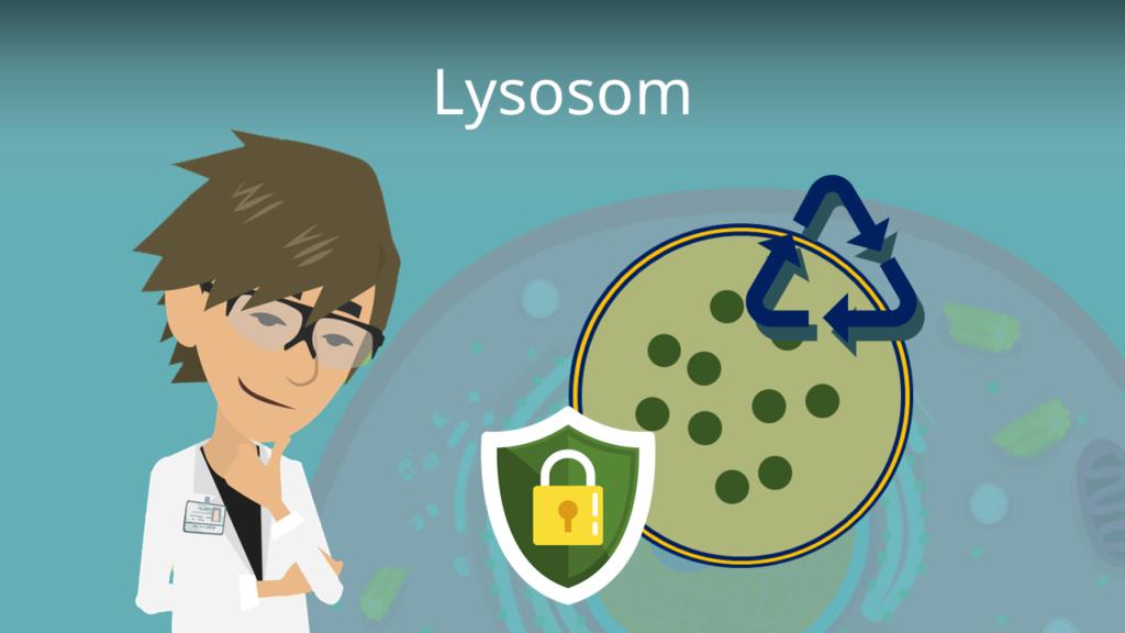 Zum Video: Lysosom