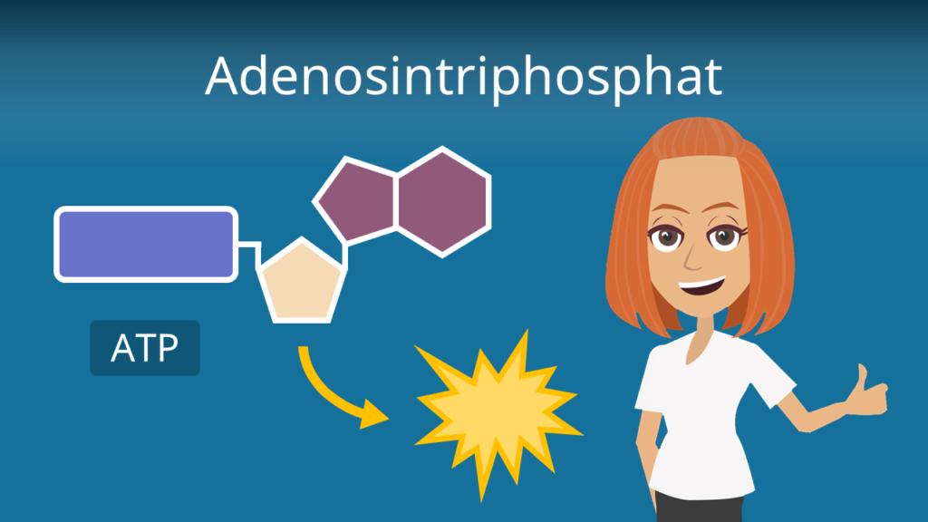 Zum Video: Adenosintriphosphat