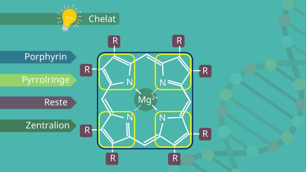 Porphyrin, Chlorophyll Aufbau, Chlorophyll Struktur, Strukturformel, Photosynthese, Pyrrol