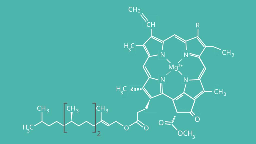Chlorophyll a, Strukturformel, Struktur, Aufbau, Chlorophyll