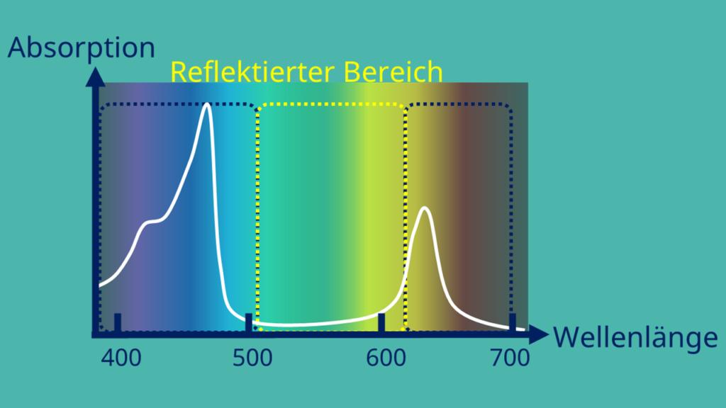 Absorptionsspektrum, Chlorophyll b