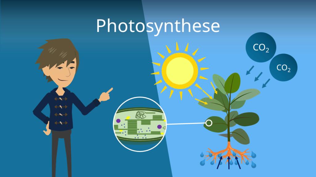 Zum Video: Photosynthese