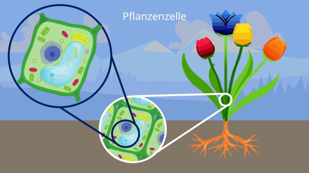 Pflanzenzelle, pflanzliche Zelle Blume, Pflanze