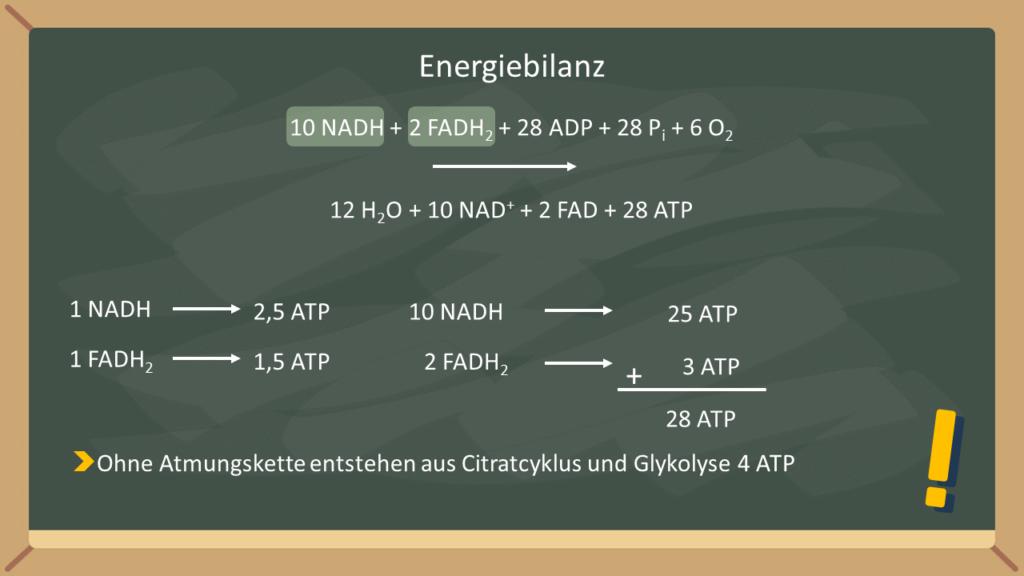 Komplex I, II, III, IV, Elektronentransport, Elektronentransportkette, Mitochondrien, Mitochondrienmembran, Ubichinon, Cytochrom c, NADH, FAD