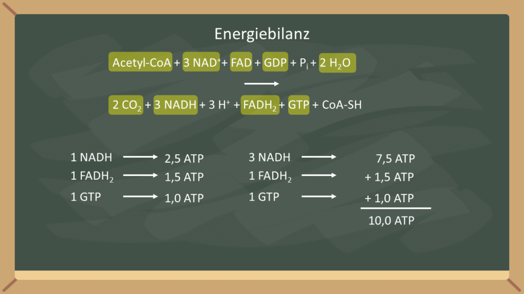 Citratzyklus, Zitronensäurezyklus, FAD, NADH, Acetyl-CoA, Proteine, Fette, Kohlenhydrate, Glykolyse, Atmungskette, Oxidation, Aminosäuren, Pyruvat, Energiebilanz