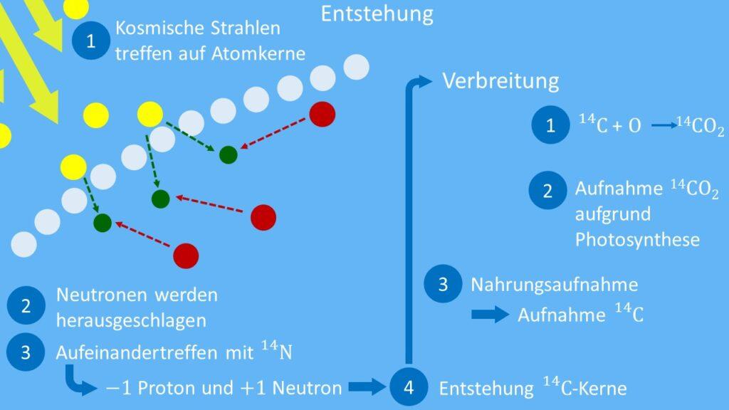 C14 Entstehung und Verbreitung
