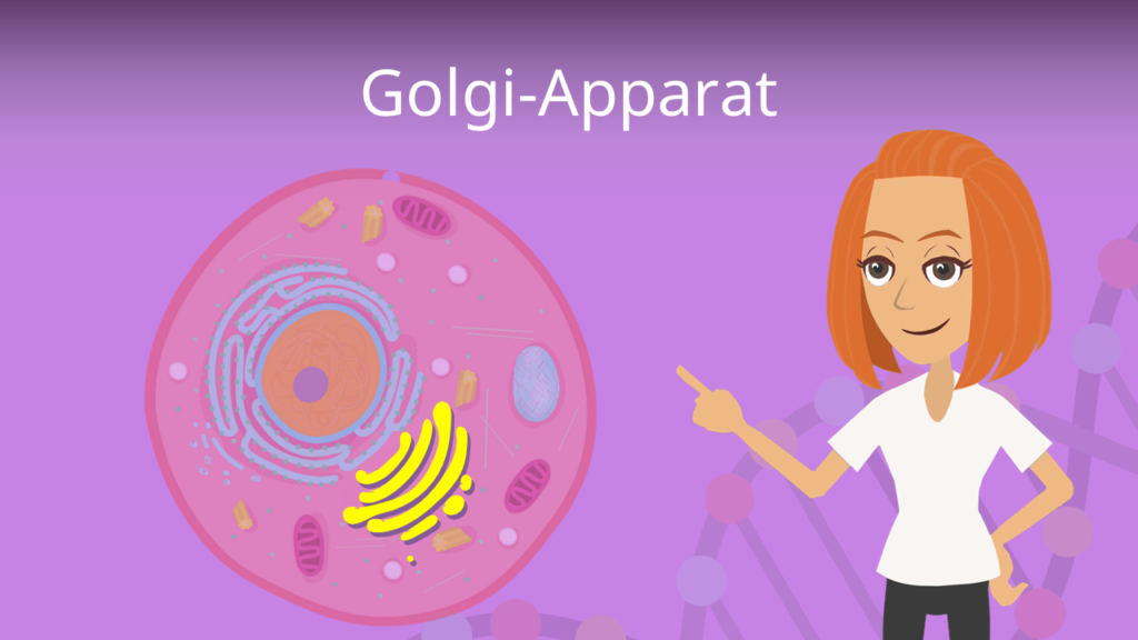 Zum Video: Golgi-Apparat