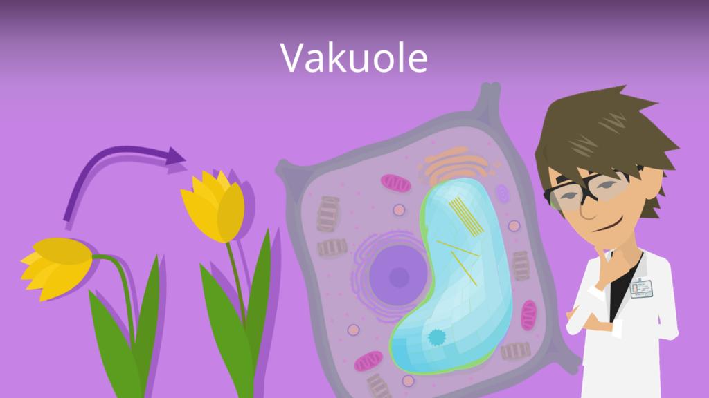 Zum Video: Vakuole