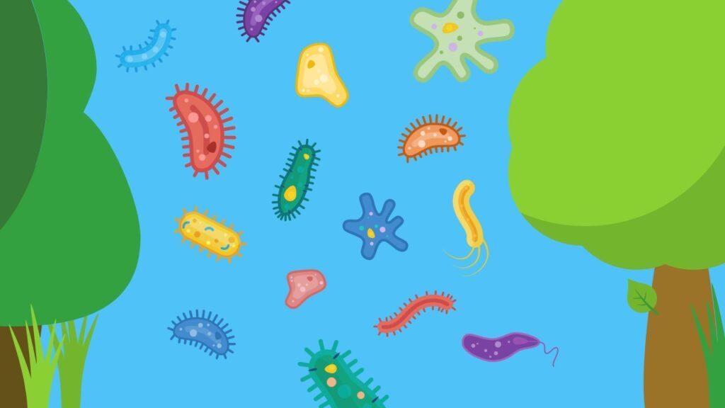 Einzeller, tierische Einzeller, pflanzliche Einzeller, Pilze, Wimperntierchen, Geißeltierchen, Wurzelfüßer