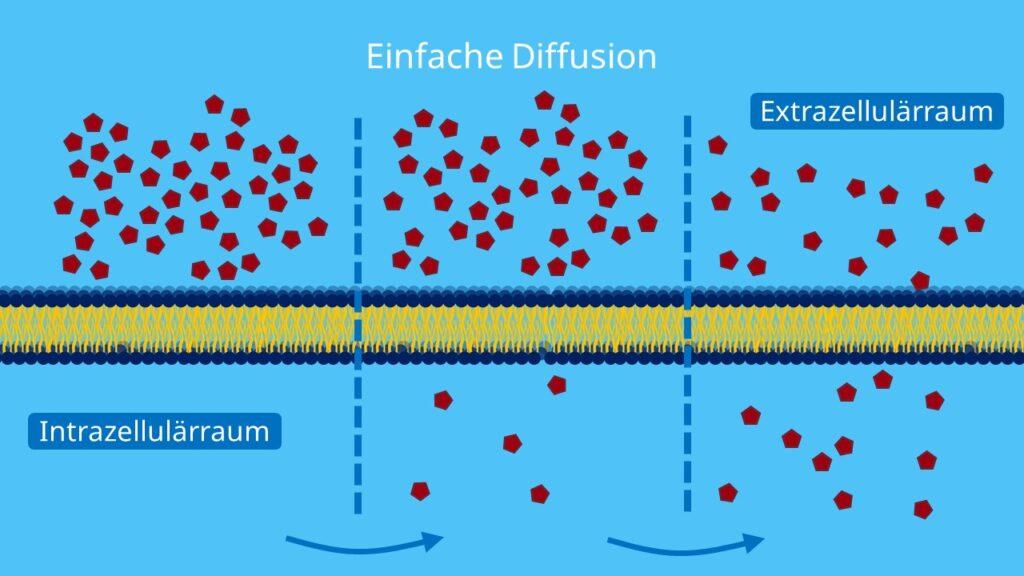 Einfache Diffusion, Diffusion, semipermeable Membran, Biomembran, passiv, Phospholipide