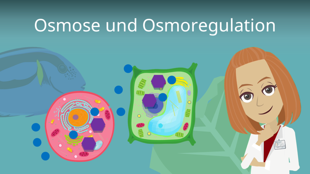 osmose, osmoseregulation