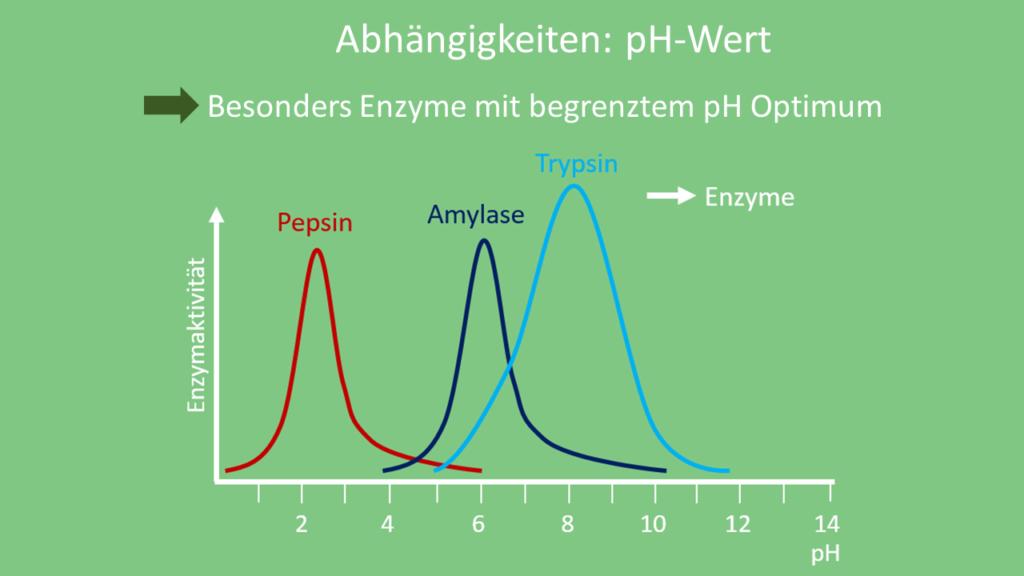 Reaktionsgeschwindigkeit pH Wert, Reaktionsgeschwindigkeit pH-Wert, Reaktionsgeschwindigkeit Abhängigkeiten