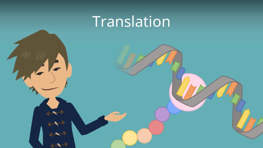 Zum Video: Translation