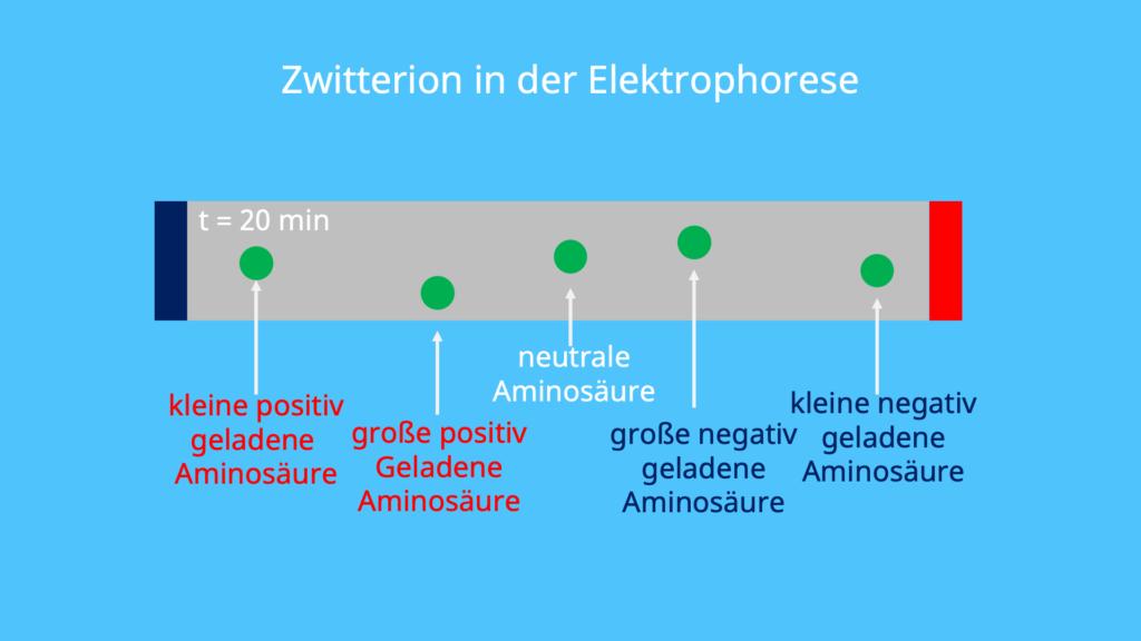 Zwitterion, Elektrophorese, Wanderung Kation Anion, Aminosäure, positiv geladen, negativ geladen, Konzentration von Protonen, dissoziiert