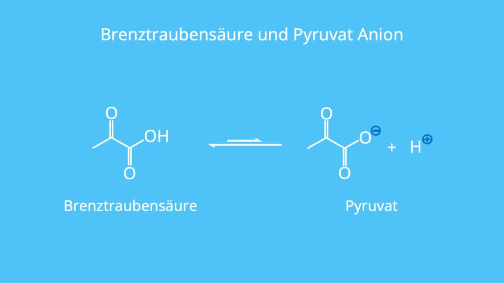 Brenztraubensäure, Pyruvat, Gleichgewicht, Säure, Base, Anion