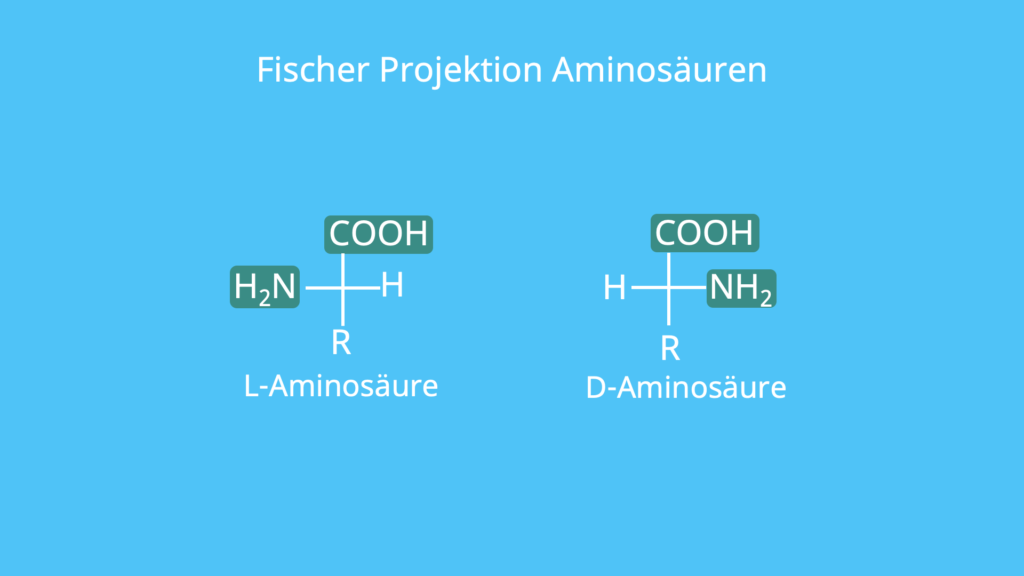 Aminosäure, Fischer Projektion, L-Aminosäure, D-Aminosäure, Aminogruppen, funktionelle Gruppe