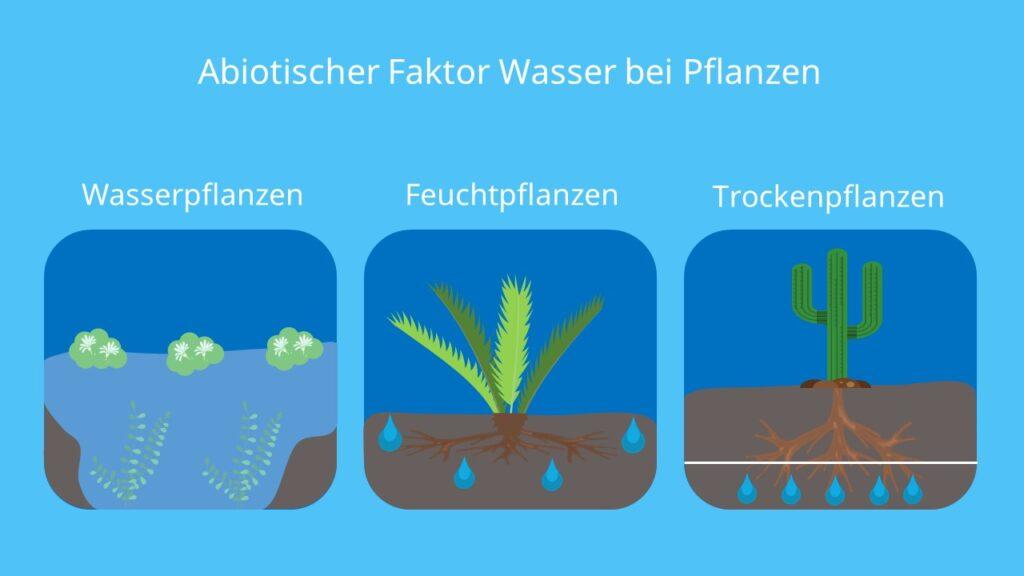 Abiotische Faktoren, Abiotische Umweltfaktoren, Ökofaktoren, Wasser, Pflanzen, Lebewesen, Wasserpflanzen, Feuchtpflanzen, Trockenpflanzen