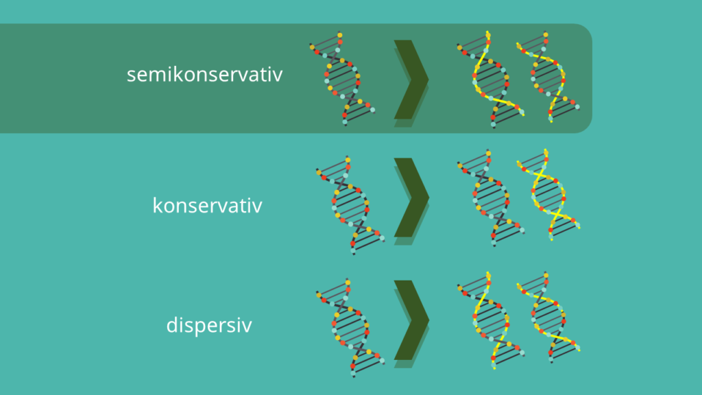 DNA, semikonservativ, konservativ, Meselson Stahl Experiment, despersiv