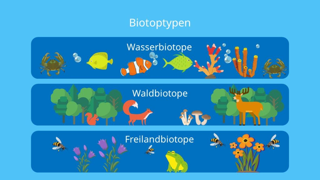 Wasserbiotop, Waldbiotop, Freilandbiotop, Feuchtbiotop, Wüstenbiotop, Küstenbiotop, Biotop, Biozönose, Ökosystem