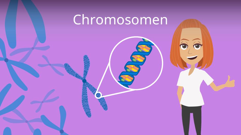Zum Video: Chromosomen