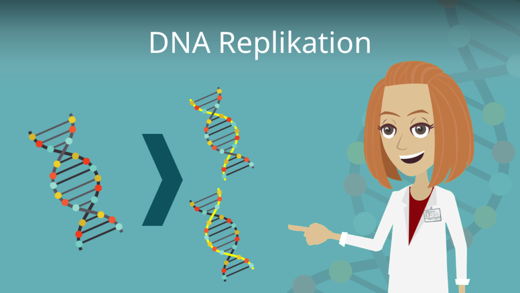 Zum Video: DNA Replikation