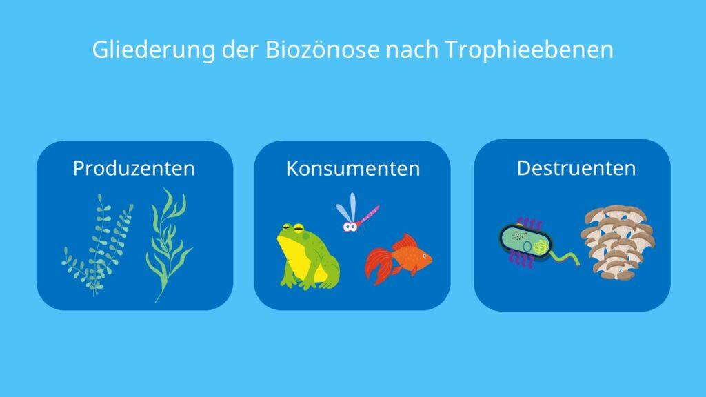 Produzenten, Konsumenten, Destruenten, Lebewesen, Tiere, Pflanzen, Bakterien, Pilze, Mikroorganismen, Unterteilung, Biotop
