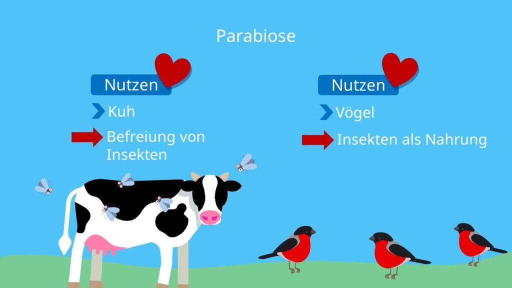 Biotischer Faktor, Interspezifische Beziehung, zwei Arten, Interaktion, Wechselwirkung, Vorteile
