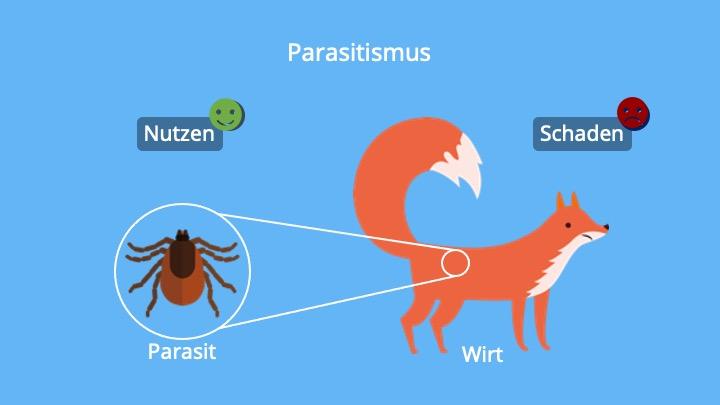 Parasit, Wirt, Interspezifische Wechselwirkung, Ausbeutung, Schmarotzertum, Schmarotzer, Biologie