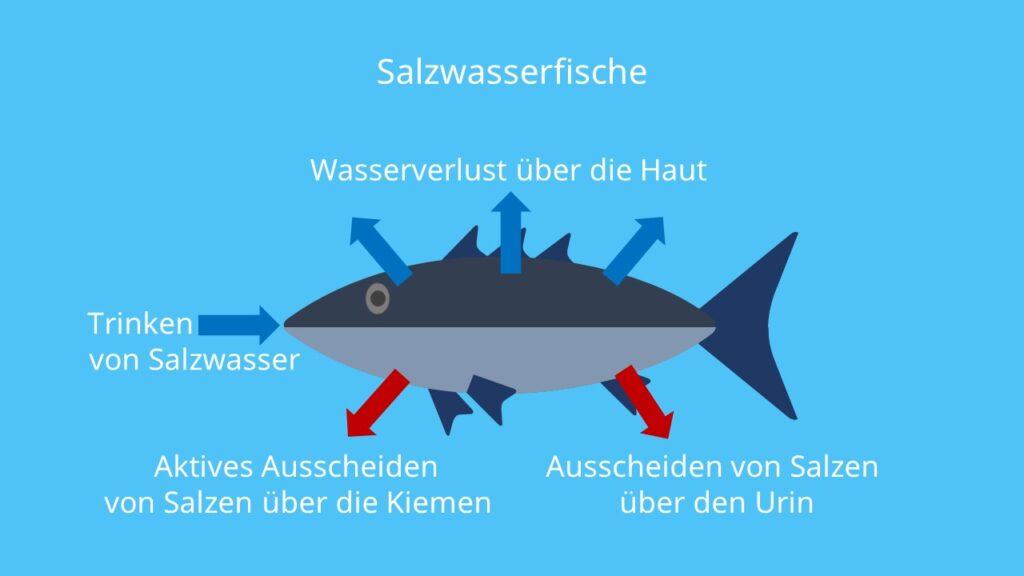 Abiotischer Faktor Wasser, Abiotische Faktoren, Umweltfaktoren, Tiere, Lebewesen, Auswirkung, Wechselwirkung