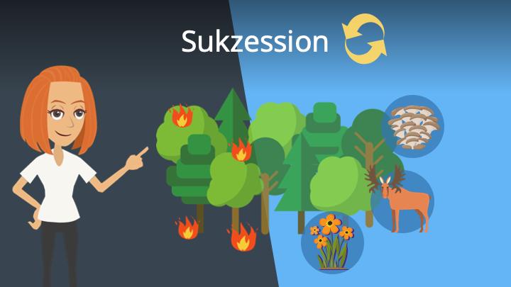 Zum Video: Sukzession