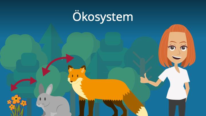 Ökosystem, Ökosystem Definition, Ökosystem Eigenschaften