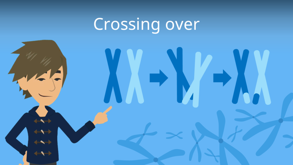 Zum Video: Crossing over