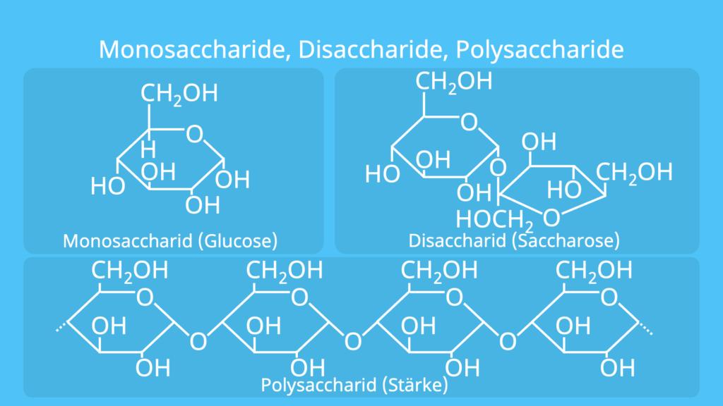 Monosaccharide Disaccharide Polysaccharide, Monosaccharid, Disaccharid, Polysaccharid
