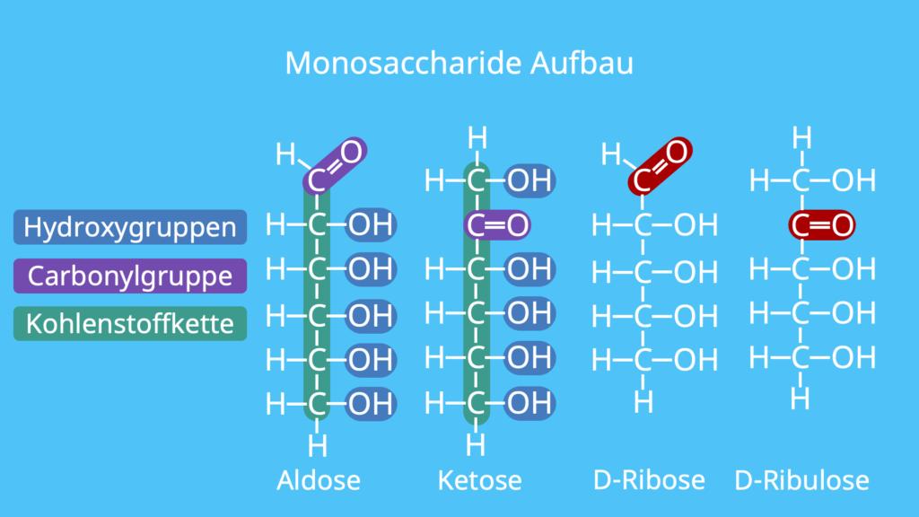 Monosaccharide Aufbau, Struktur, Ribose, D-Ribose, Ketose, Aldose
