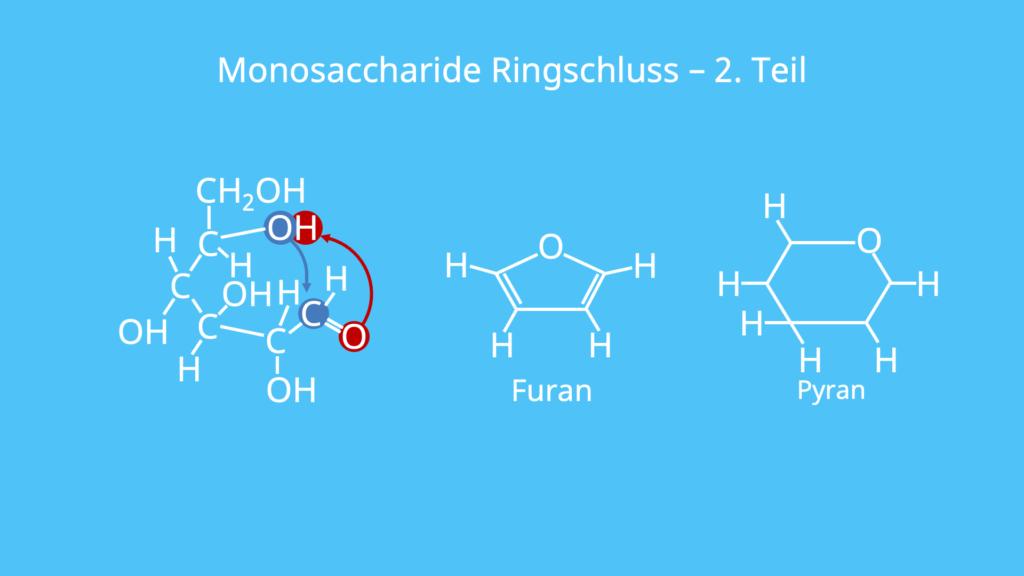 Monosaccharid Ringschluss, Monosaccharide, Struktur, Aufbau, Furanose, Pyranose