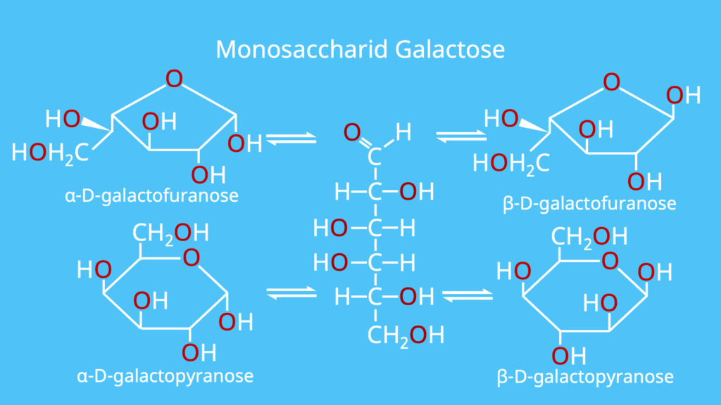 Monosaccharid, Monosaccharide, Galactose, Beispiel, Beispiele