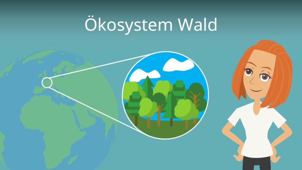 Zum Video: Ökosystem Wald