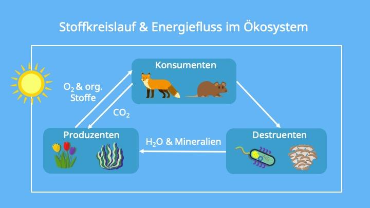 Ökosystem Wald, Produzenten, Konsumenten, Destruenten, Biomasse, Energie, Sonnenlicht, Photosynthese, Organische Substanz