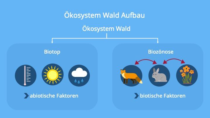 Biotop, Biozönose, Ökosysteme, Bäume, Abiotische Faktoren, Biotische Faktoren