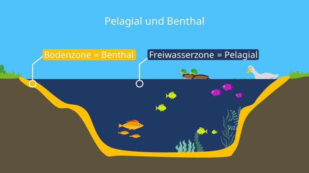 Freiwasserzone, Bodenzone, Zonierung See, Seezonen, Unterteilung Ökosystem See