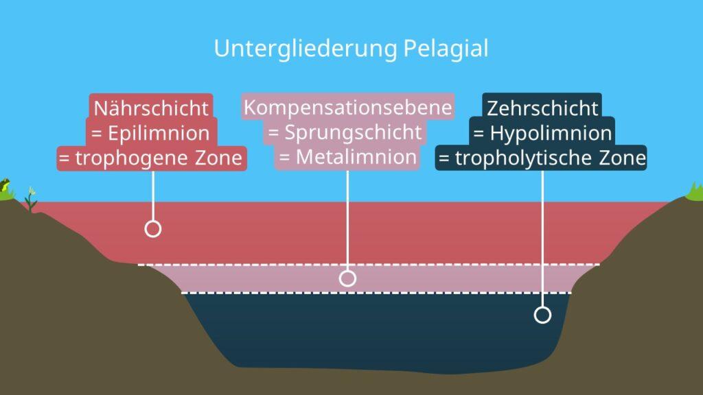 Freiwasserzone, Nährschicht, Sprungschicht, Zehrschicht, Epilimnion, Metalimnion, Hypolimnion, Unterteilung See, Zonierung, Ökosystem See
