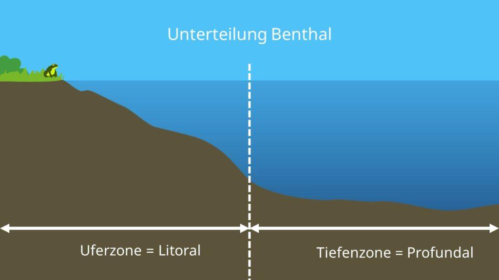 Bodenzone, Uferzone, Litoral, Tiefenzone, Profundal, Zonierung, See, Ökosystem See