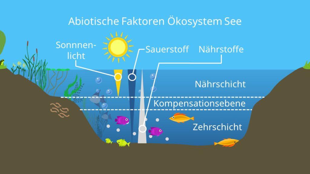 Nährstoffe, Sonnenlicht, Sauerstoff, Temperatur, Ökosystem See, abiotischer Faktor