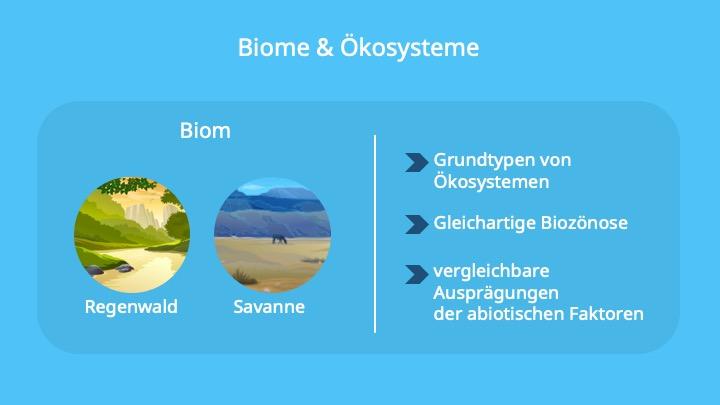 Biom, Ökosystem, Ähnliche Umweltbedingungen, Beispiel, abiotisiche Faktoren