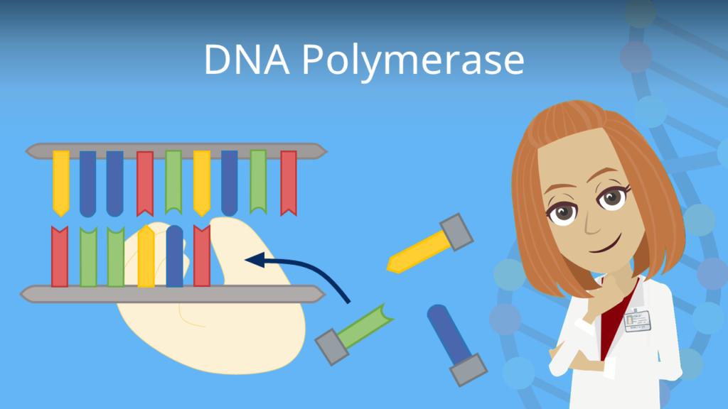 Zum Video: DNA Polymerase