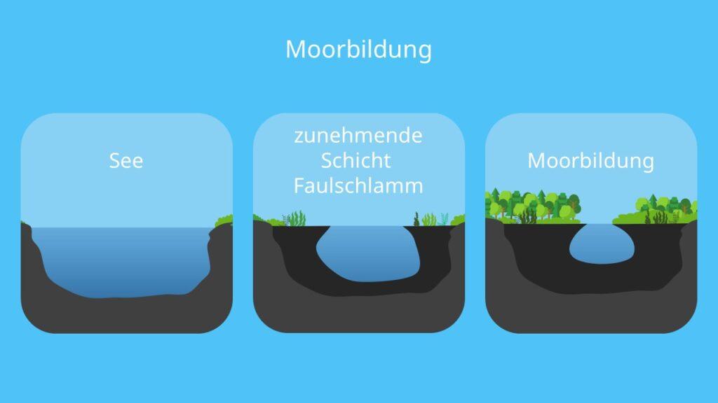 Eutrophierung, Verlandung, Eutrophierung Folgen, Biomasse