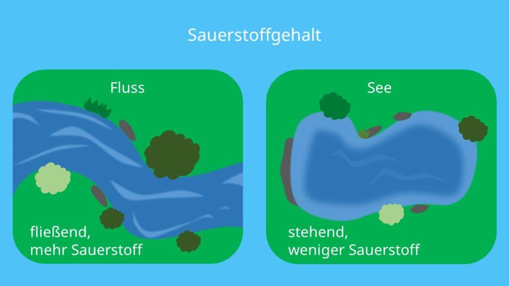 Selbstreinigungseffekt, selbstreinigung, Eutrophierung, Fluss, See