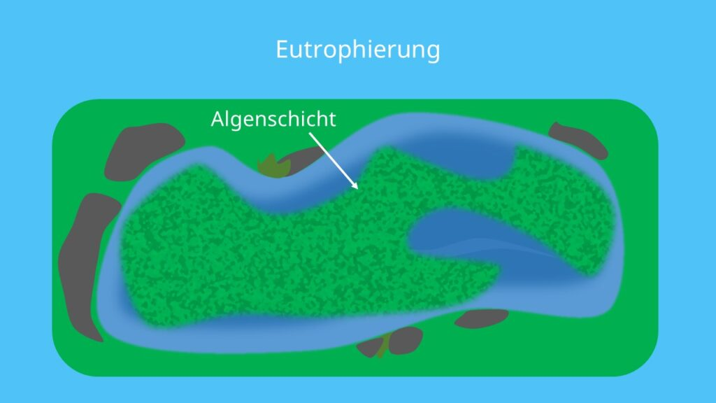 Eutrophierung, Algen, See, stilles Gewässer