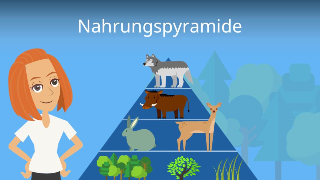 Zum Video: Nahrungspyramide