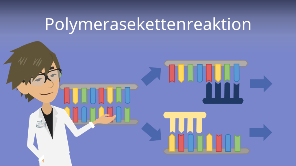 Zum Video: Polymerasekettenreaktion